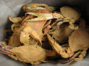 steamed crabs, mominthemuddle.com